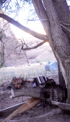 Saddle Under Tree